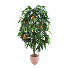 Mango medis EUROPALMS Mango tree with fruits, 180cm