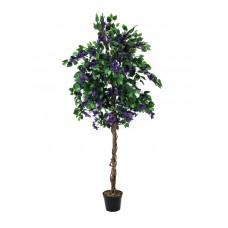 Bugenvilija EUROPALMS Bougainvillea, lavender, 180cm