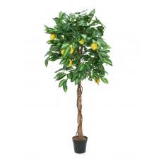 Dirbtinė citrina , medis EUROPALMS Lemon Tree, 180cm