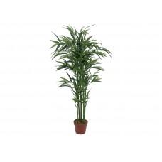 Bambukas EUROPALMS, 120cm
