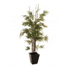 Dirbtinis bambukas EUROPALMS Bamboo black trunk, 152cm