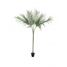 Dirbtinė palmė EUROPALMS Areca Palm su dideliais lapais, 180cm