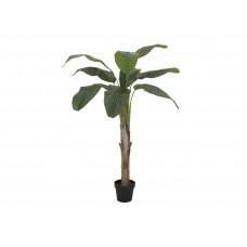 Dirbtinė banano palmė EUROPALMS  145cm