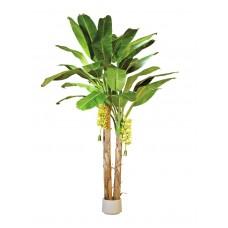 Aukšta bananų palmė EUROPALMS, 440cm