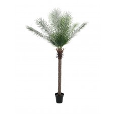 Dirbtinė palmė EUROPALMS Phoenix deluxe, 220cm