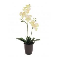 Dirbtinė orchidėja vazone EUROPALMS kreminė, 57cm