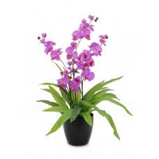Dirbtinė purpurinė orchidėja vazone EUROPALMS  80cm