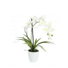 Balta dirbtinės orchidėjos kompozicija