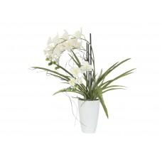 Orchidėjos kompozicija EUROPALMS