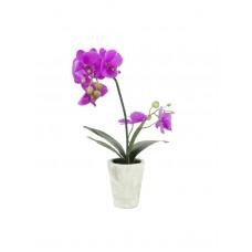 Dirbtinė orchidėja EUROPALMS Orchid arrangement 3