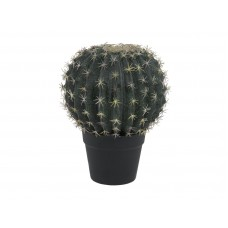 EUROPALMS Barrel Cactus, 34cm