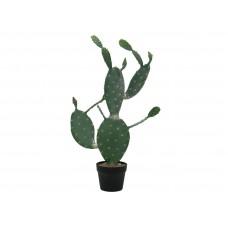 EUROPALMS Nopal cactus, 76cm