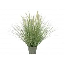 Dekoratyvinė žydinti žolė EUROPALMS, 70cm