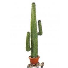 EUROPALMS Mexican Cactus, green, 140cm