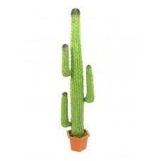 Meksikietiškas kaktusas EUROPALMS Mexican Cactus, green, 170cm