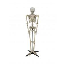 Animuotas helovyno skeletas EUROPALMS 163cm